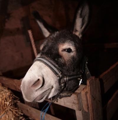 Esel, manchmal zickig. Foto: Stefan Blank.